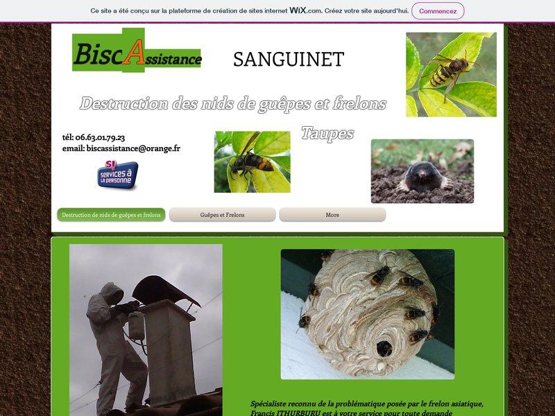 Destruction nids de frelons Biscarrosse