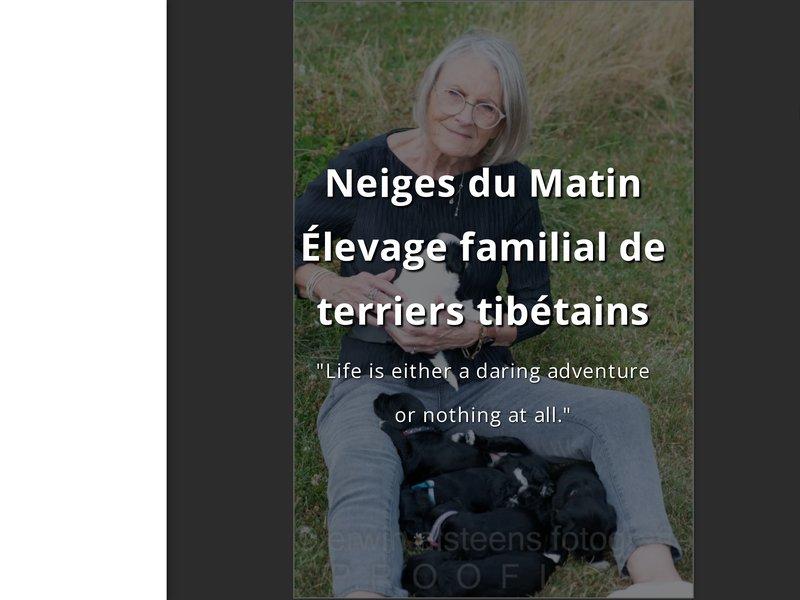 Élevage familial de terriers tibétains