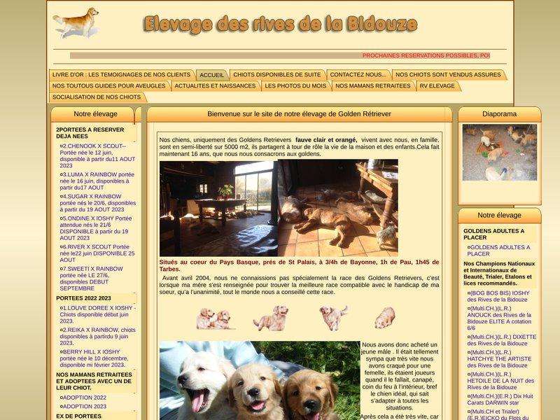 Elevage de chien golden retriever